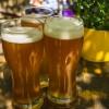 Cerveja está mais popular entre jovens adultos