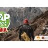 Gap Year PT oferece bolsa até mais de 6 mil euros