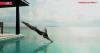 Emissão online: Um mergulho no verão quente das marcas