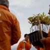 Galp e ANEFA plantaram 7500 árvores na Serra do Açor