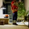 Porque não alugar um pinheiro este Natal?