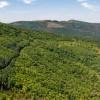 Esta marca vai plantar 10 mil árvores em Portugal
