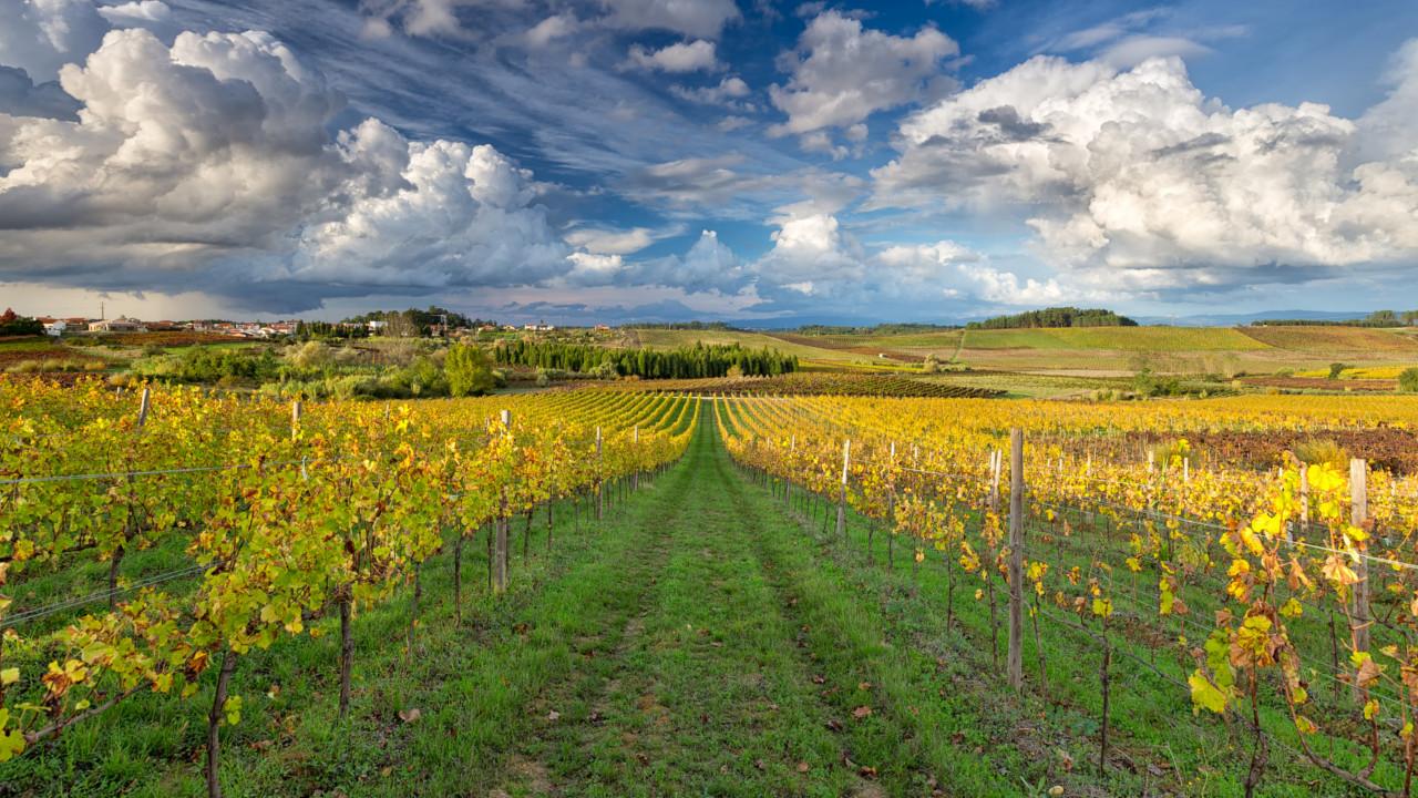 """""""O turismo associado ao vinho é decisivo no futuro da região Centro"""""""